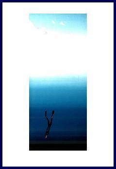 Pascal'freediver